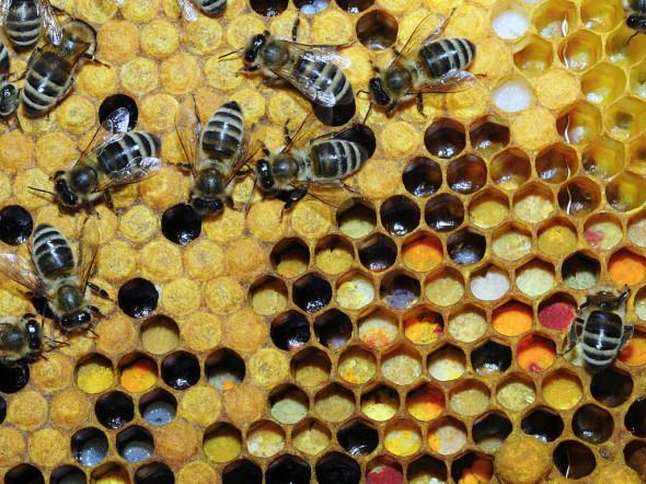 honeybee_comb