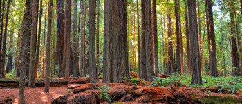 Space lasers could help count the carbon for the trees