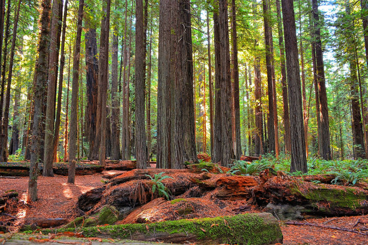 Space lasers could help count the carbon for the trees ...